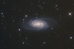 NGC2903 - Lion